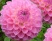 Градина на колела + видео