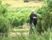 147 лозаро-винарски стопанства се борят за 60 млн.лв.