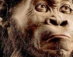 Откритие: Древният човек се е зародил в Чирпан