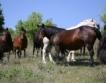 ДФЗ изплати 20.2 млн.лв. за агроекология