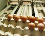 Яйца с фипронил в 15 страни