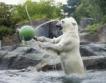 Виена: Прохлада в зоопарка + видео