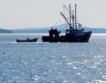 955 м мрежи и 80 кг риба иззети