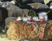 Изплатени 1 млн.лв. застраховки за фермери