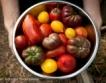 +10% ръст на производството на зеленчуци