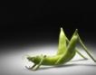 Забрана на реклами за ГМО