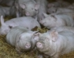 94% от фермите не излизат на пазара
