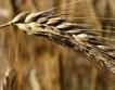 2017-та рекордна за нови сортове пшеница