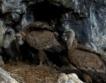 В гнездото на лешояда, видео