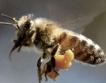 Икономическата сила на пчелите