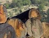 ЮЗДП спира временно е-търгове за дървесина