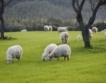 Животновъди: Хапвайте продукти от овче мляко!