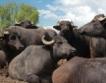 """Воден матрак за крави на """"Агра"""""""