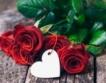 Откъде идват вносните рози в ЕС?