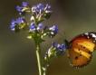 Биоразнообразието в цифри