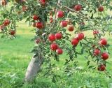 Без пестициди в плодовете и зеленчуците