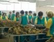 85 млн. лв. за 41 000 тютюнопроизводители
