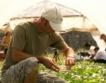 Земеделие: Лек спад при цени на производител