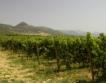 Колко струва разработена ферма за вино?