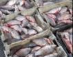 От всеки 5 т. риба, 4 т. незаконни