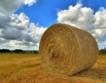 Дребните земевладелци притежават 80% от земята у нас