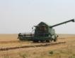 25% спад на прибраната пшеница