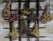 Ето кои билки са забранени за събиране