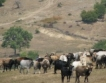 Селско стопанство: Цените при производител по-ниски