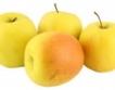 Време за избор на ябълки