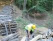 ЮЦДП Смолян: 388 хил. куб. м дърва за огрев