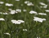 България - лидер в производството на билки