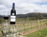 +500 млн. лв. инвестирани в сектор вино
