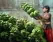 Индия дава по $84 на дребни земеделци годишно
