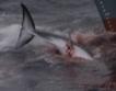 Япония иска нова китоловна организация