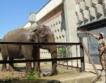 София: +139 новородени в зоопарка