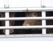 +10% ръст на превозените животни в ЕС