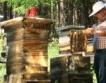 1.2 лв. срещу болести в пчелните кошери