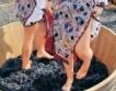 137 лозаро-винарски стопанства се борят за 80 млн.лв.