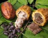 100% от какаото за Монделийз ще идва Cocoa Life