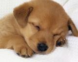 3 872 безстопанствени кучета са осиновени