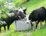 Г-7 прие харта за биоразнообразието