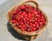 60 ст. изкупна цена за кг череши
