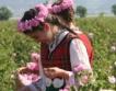Фестивал на розата в Карлово + цифри