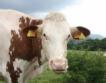 550 хил.лв. за месодайни крави