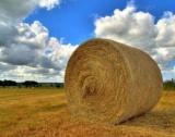 Земеделската земя в Русе = 1093 лв./дка