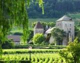 Данъци: Вино vs тех гиганти
