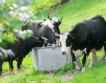 Платени субсидии по de minimis на 14 000 животновъди