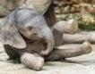 Във Виена се роди слонче + снимки