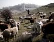 Български породи обце и кози във Вършец