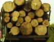 В. Търново рециклира дървесина